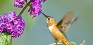 Photo: Birdgal/Shutterstock