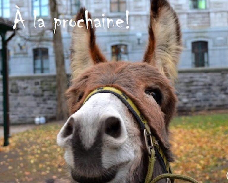 Becoming a donkey church